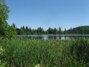 Steilacoom-5-Waughop-Lake